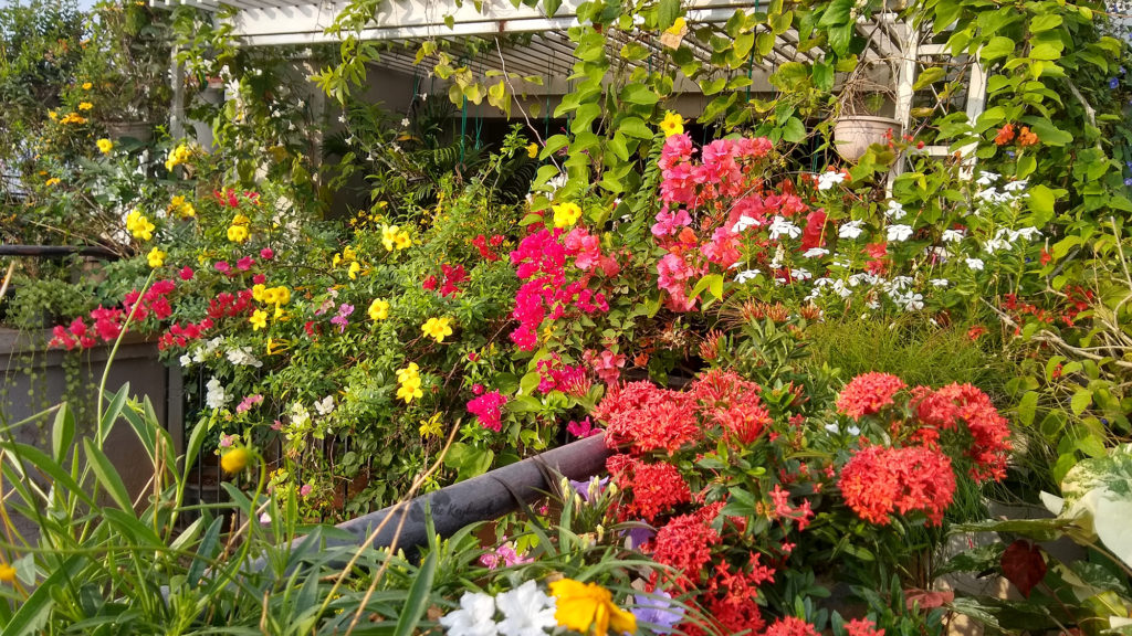 Jayashree Rajan's garden apartment tour on The Keybunch: flowers bloom in the garden